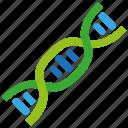 gene, dna, biology