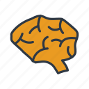 brain, healthcare, human, medical icon icon