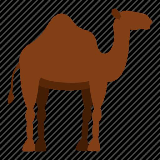 africa, animal, camel, desert, dromedary, egypt, travel icon