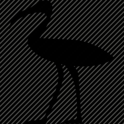 bird, culture, egypt, egyptian, language icon