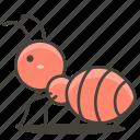 animal, ant, wild icon