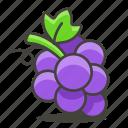 fresh, fruit, grape icon