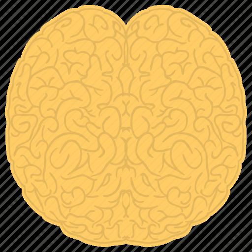 human brain, human mind, human nervous system, memory, psychology icon