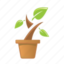 eco, leaf, nature, plant icon