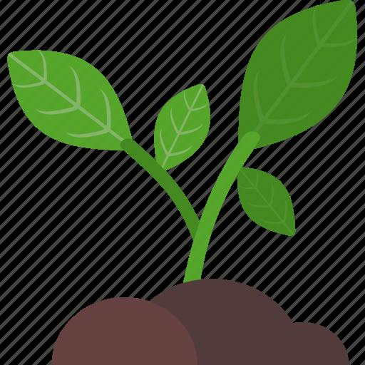 analytics, business, growth, plant icon