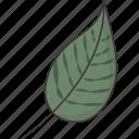 green, leaf, natural, nature