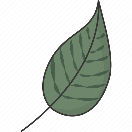 green, leaf, natural, nature icon