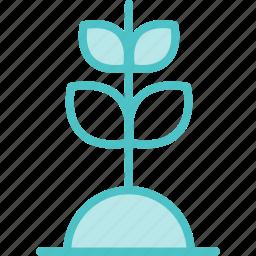 grow, growth, plant icon