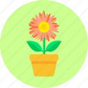 blossom, flower, flowerpot, home, leaves, plant, pot flower icon