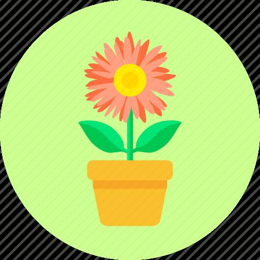 blossom, flower, flowerpot, home, leaves, plant, pot flower icon