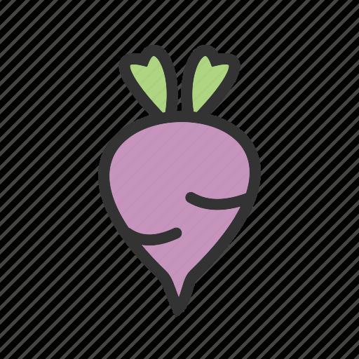 beet, beetroot, food, organic, purple, red, vegetable icon