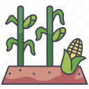 corn, farm, food, garden, plots