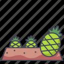 farm, fruit, garden, pineapple