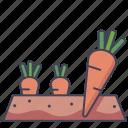 carrot, food, garden, organic, vegetable