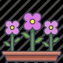 beauty, flower, garden, plant, spring