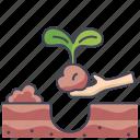 garden, growth, life, plant, tree