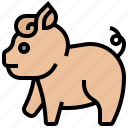 animal, domestic, farm, livestock, pig
