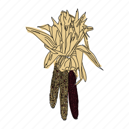 autumn, color, corn, food, hand drawn, indian corn, vegetable icon