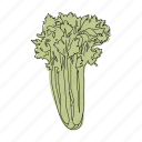 celery, color, food, green, hand drawn, restaurant, vegetable icon