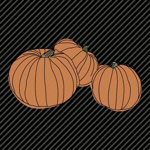 color, fall, food, halloween, hand drawn, pumpkins, vegetable icon