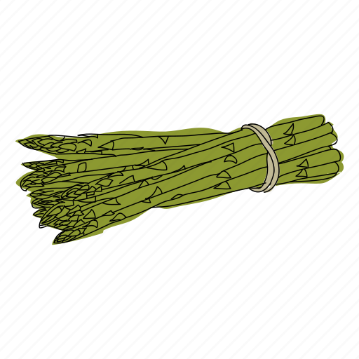 asparagus, color, food, hand drawn, health, vegetable, vegetarian icon