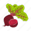 beets, color, food, hand drawn, nutrition, red, vegetable icon