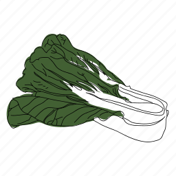 bok choy, color, culinary, food, hand drawn, leafy green, vegetable icon