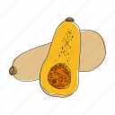 butternut squash, color, food, hand drawn, recipe, squash, vegetable icon