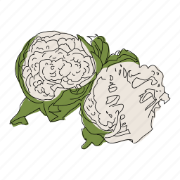 cauliflower, color, food, hand drawn, healthy, vegetable, veggie icon