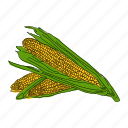 color, corn, food, hand drawn, harvest, vegetable, yellow icon