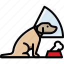 cone, dog, labrador, pet icon