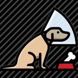 cone, dog, labrador, pet icon