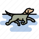 dog, labrador retriever, pet, swimming icon