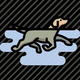 dog, labrador retriever, pet, swimming icon