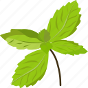 basil, basil leaves, basil paste, basil seeds, vegetables icon icon