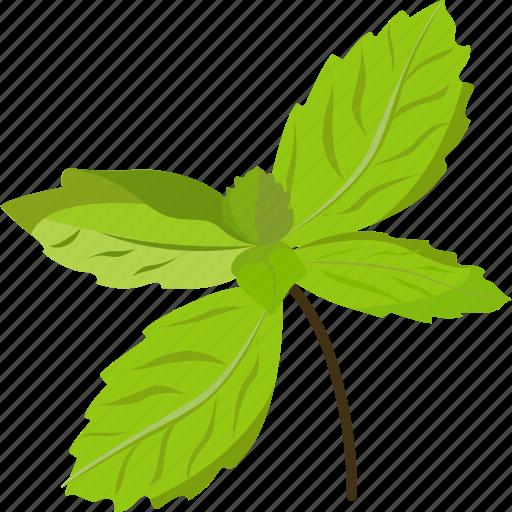 basil, basil leaves, basil paste, basil seeds, vegetables icon icon