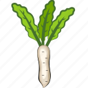 radish, radish leaf, radish salad, radish soup, vegetables icon, white radish icon