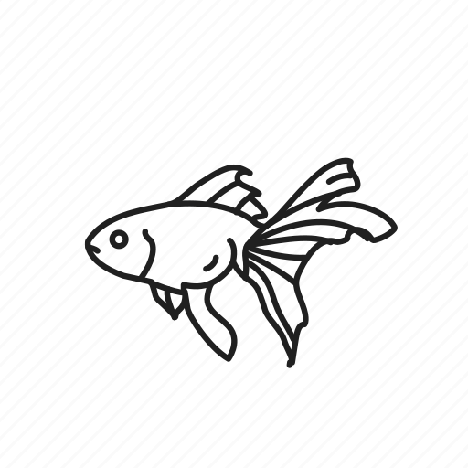 aquarium fish, carassius auratus, domesticated fish, fish, goldfish, pet fish icon
