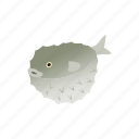 animal, blog, fish, isometric, ocean, puffer, sea icon