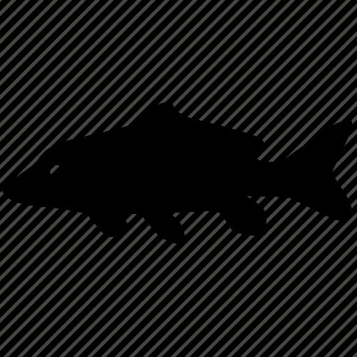 carp, fish, food, predator, river icon