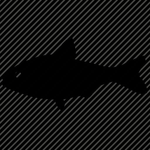 fish, gizzard, river, sea, seafish, shad icon
