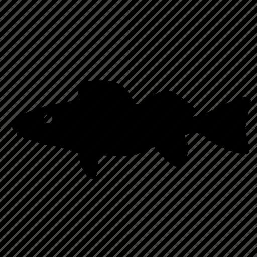fish, food, predator, river, waleye icon