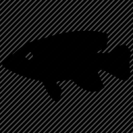 fish, food, predator, river, sunfish icon