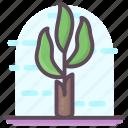 banana tree, botany, dendrology, ecology, forest, plant icon