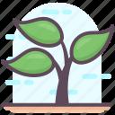 botany, dendrology, ecology, forest, plant, tree icon