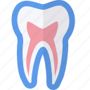 dental, medical, pulp, tooth icon