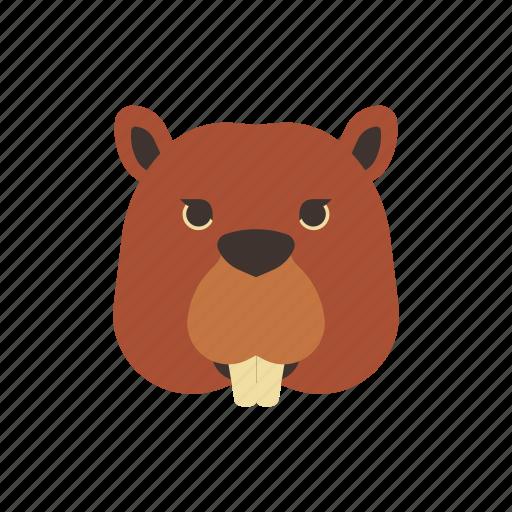 animal, beaver, canada, characteristic, mascot, river, wild icon