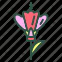 blossom, floral, flower, gladoli, nature icon