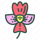 blossom, floral, flower, iris, nature icon