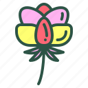 blossom, floral, flower, nature, poeny icon